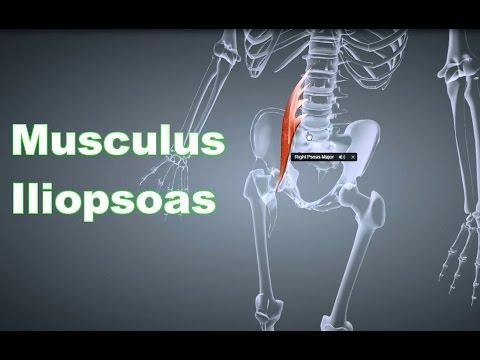 Bewertungen cinquefoil mit Osteoarthritis des Knies