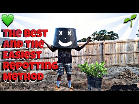 HOW TO REPOT A PLANT WITHOUT KILLING IT