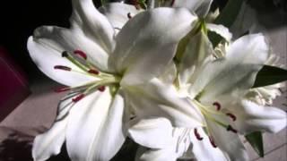 Anggun - A la plume de tes doigts