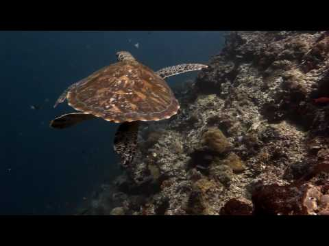 Swim With A Sea Turtle Thanks To The Canon 5D Mark II