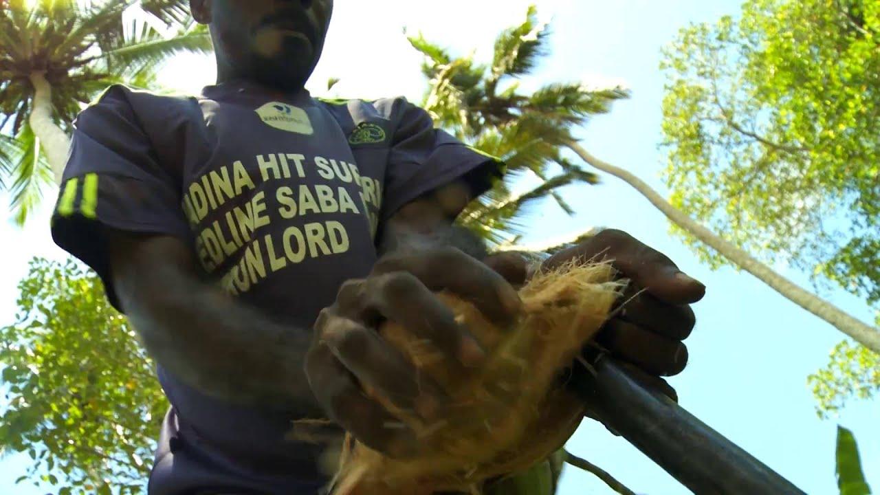 Tansania: Zimtbaum (1:40)