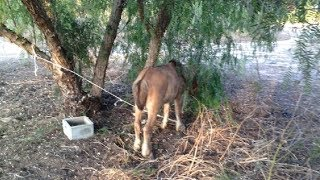 Police Who Find A Horse Tied To A Tree Are Heartbroken To Discover Why He Won't Turn Around
