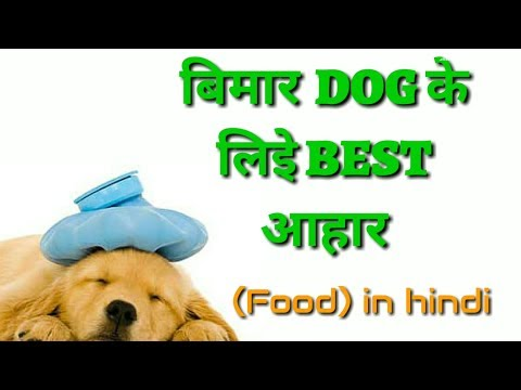 Dog Best Diet Food In Hindi | Bimar Dog Ke Liye Best Food ||Best Food For Sick Dogs