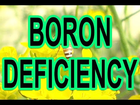 , title : 'HOW TO IDENTIFY AND TREAT BORON DEFICIENCY IN PLANTS-ADVANTAGES AND BENEFITS OF BORAX (URDU/HINDI)