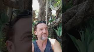 600 year old Frangipanis trees Bali
