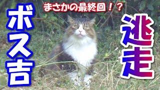 ボス猫、ハーネスを脱ぎ捨て逃走する! Boss cat, gets off the harness and escape! | Kholo.pk