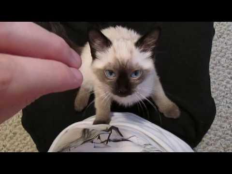 아기고양이가 골골송 하는 영상