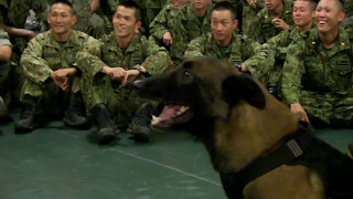 French Devil Dogs