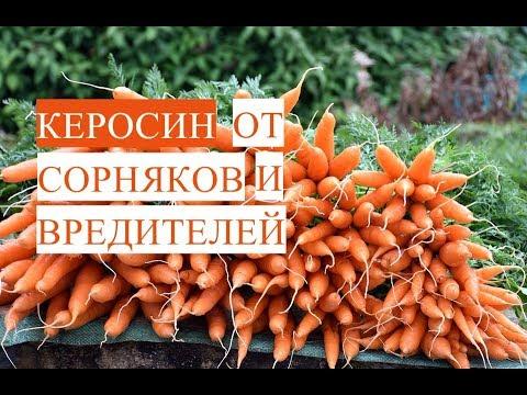 Прополка Моркови Керосином. Керосин от Сорняков и Вредителей. (03.06.17)