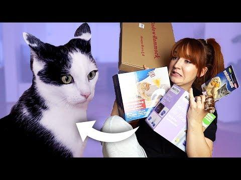 Ich teste Katzenspielzeug mit meinem Kater Jackson
