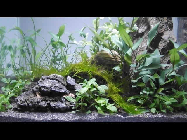 Aquascape by Owen White, 11yrs old, using Tropica Plants, Substrate and fertilizers