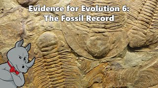 Evidence for Evolution - The Fossil Record
