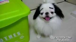 Kemancı İsmail'in Köpeği
