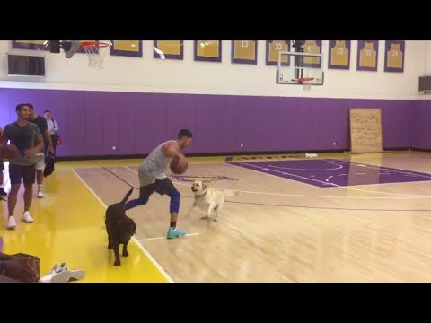 Klay Thompson challenges dog to one-on-one game   ESPN