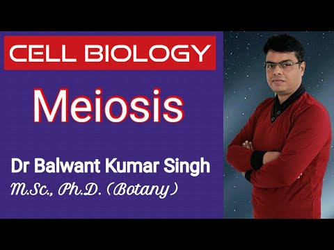 Cell Biology- Meiosis
