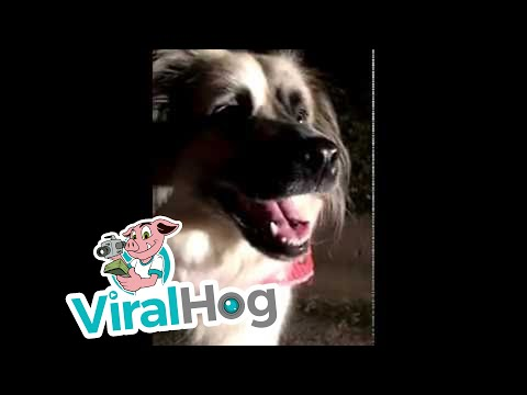 Sweet Dog Rescues Worms || ViralHog