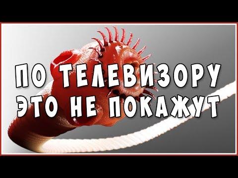 Аниме паразит фанфики
