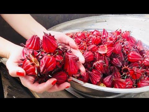 , title : 'El Cultivo de JAMAICA   Flor y Té Beneficios'