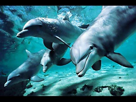 Песни дельфинов о Любви
