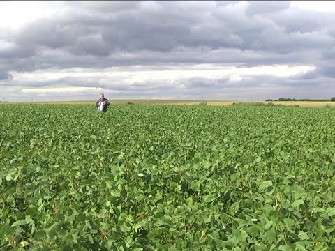 ГМО НЕ СОДЕРЖАТ. Принт ТВ 17.08.2020