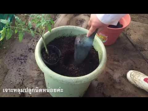 ลบแมงมุมหลอดเลือดดำที่ขาใน Saratov