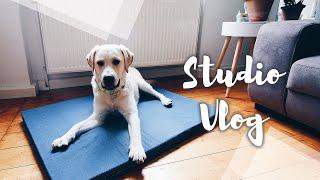 Das kann man für den Hund alles selber machen   DIY Studio Vlog