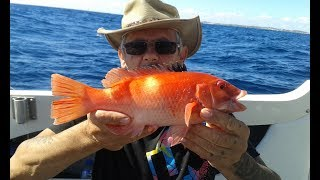 Fishing Rottnest Island WA Caught A Western Foxfish And Had A Surprise Visitor