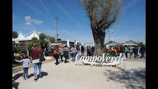 Momenti di allestimento alla Mostra Agricola Campoverde