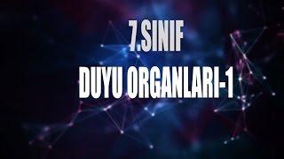 7.Sınıf #Duyu Organları-1#