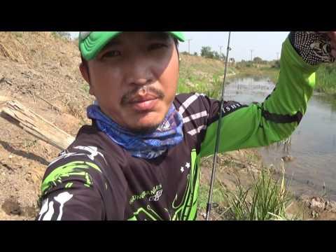 How to catch Snakehead Fish in Thailand by Kobkaekhan jump frog ส่ายแก้คันจิ๋ว กัดผิดกัดซ้ำ
