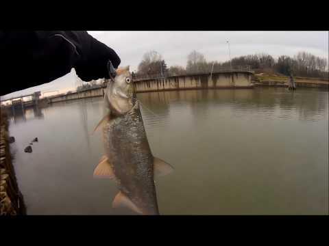 La pesca per amici di chi su che impigliarsi