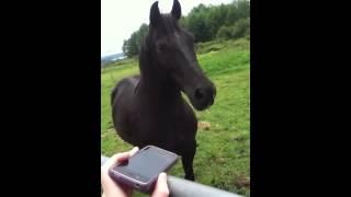 My horse Shaker listening to music