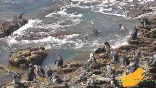 preview picture of video 'Zuid-Afrika: Via de Whaleroute naar Hermanus en Cap l' Agulhas'