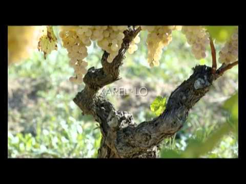 Visita + esmorzar entre vinyes al celler Albet i Noya