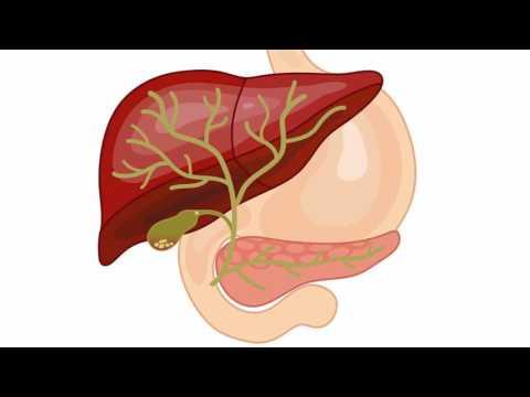 Les propriétés médicales du gingembre de limpuissance