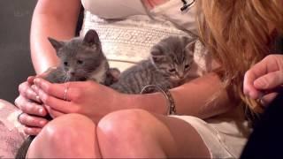 Kittens - The Jonathan Ross Show