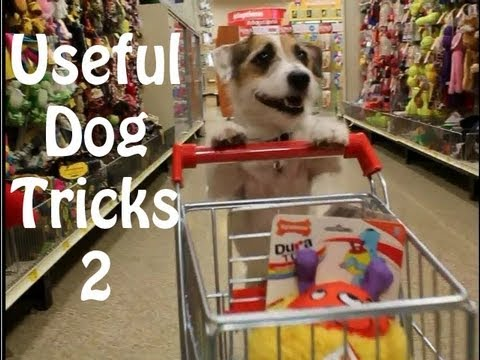 Grappige filmpjes humor kaarten, Presenting Useful Dog Tricks 2 Whoever said tricks cant be useful Jesse is back by popular funny humor