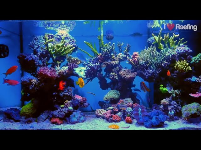 2 years Schwings Reef Tank 500l (130gal) / powered by Ecotech Radion xr30w Pro, Vortech mp40W & NYOS