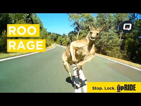 Roo Rage