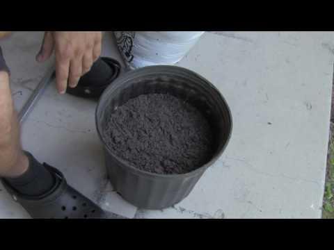 Video Ini Dia Cara Menanam Tomat Yang Mudah Bangets