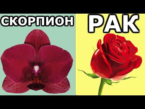 Цветы, которые приносят УДАЧУ и СЧАСТЬЕ по знаку зодиака | Я знаю
