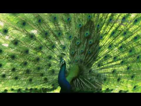 Artizen Episode - 8 by Jayesh apte