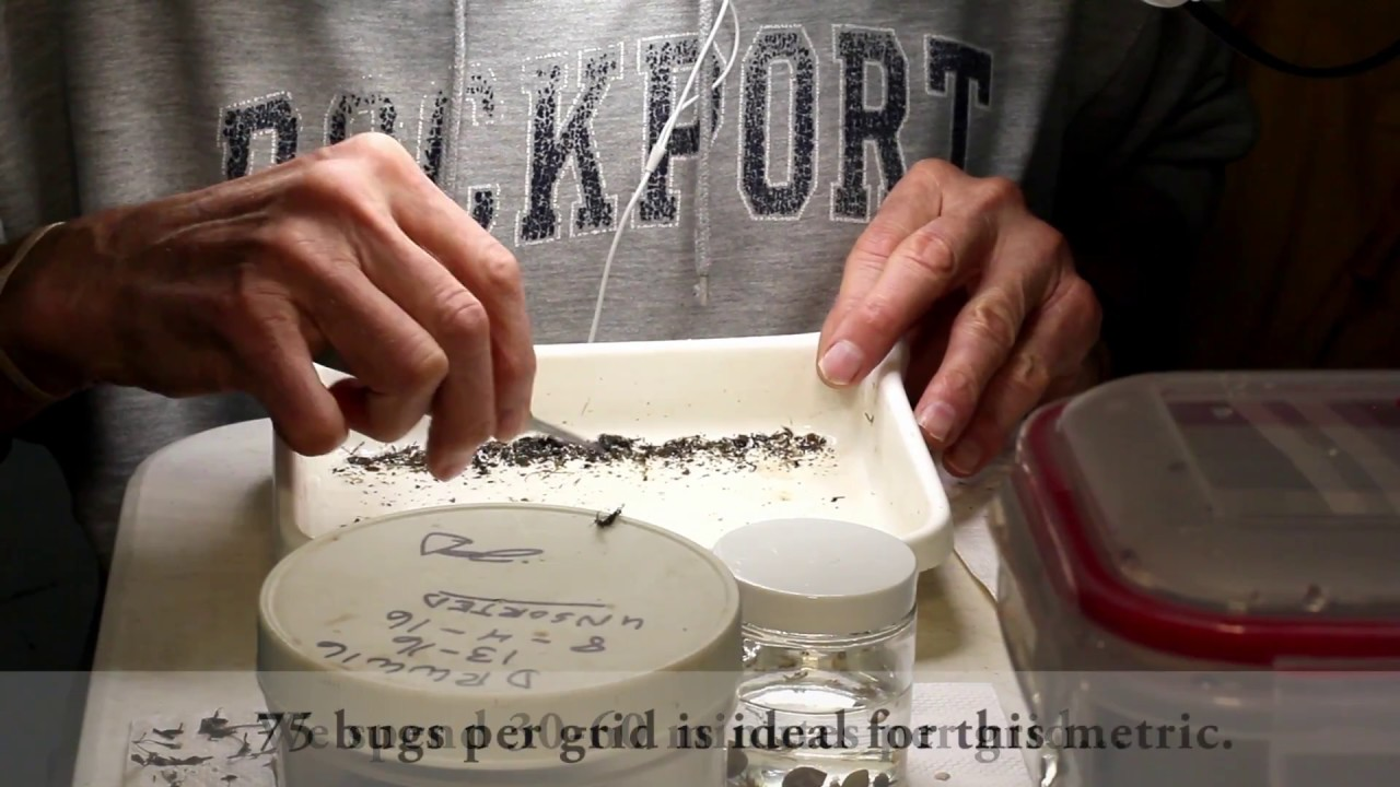 MBI LabTime Ep1 : Good Bugs Equals Good Water Quality