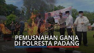 28 Kg Ganja Kering Dibakar di Halaman Mapolresta Padang, Wali Kota Ucapkan Terima Kasih