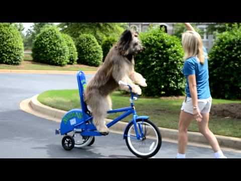 Nornam, il cane che va in bicicletta