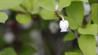 野に咲く花のようにダ・カーポピアノ弾き語りcoverbykei