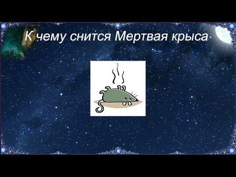 К чему снится Мертвая крыса (Сонник)