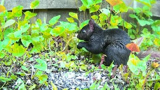 Slow TV For Cats - 12 Relaxing Hours Of Squirrels With Birdsong