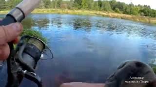 Недорогие рыбалка в тверской области на мологе