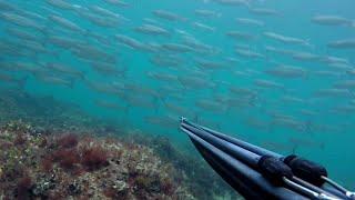 Podvodni ribolov - Najbolja pozicija u Hrvatskoj Spearfishing - Best position in Croatia